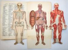 Het menselijk lichaam uitgeklapt