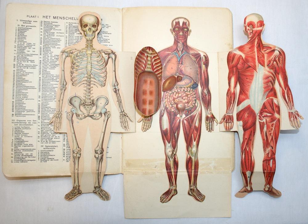 Beweegbare anatomische boeken