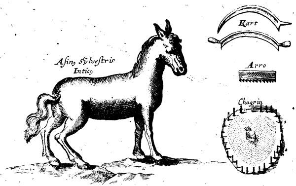 2. De afbeelding uit Valentini's boek met gereedschappen voor ontharen en ontvlezen van de huid en een op de grond opgespannen vel dat, behalve aan de buitenrand, met zaden is besprenkeld.